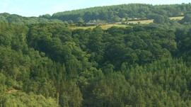 Fingle Woods, extensively planted with conifers