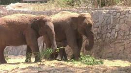 The three elephants
