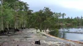 Trees swallowed by sinkhole