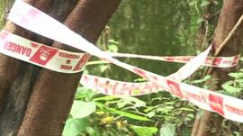 Police tape on trees