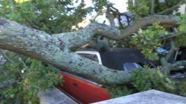 Car crushed by branch