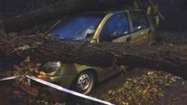 a car crushed by a falling tree in Salisbury