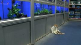 Graham the cat near the fish tanks