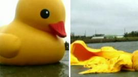 Giant duck before and after it deflated
