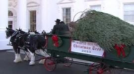 Christmas tree is delivered to the White House