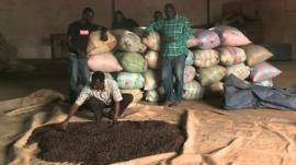 Cocoa being produced in the Ivory Coast