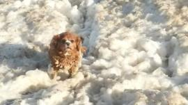 Dog plays in foam