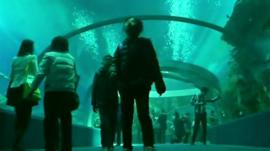 The Undersea Tunnel at Hengqin Ocean Kingdom theme park