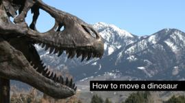 A replica of the Wankel T-Rex sits outside Montana's Museum of the Rockies