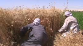 Egyptian farmers