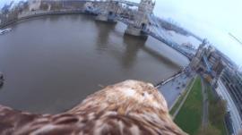 Eagle Cam