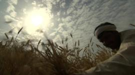 Bright sun in the sky above an Indian farmer harvesting his crop