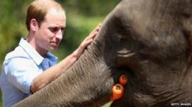 Prince William meets a rescued elephant called