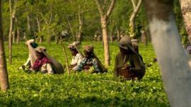 Tea workers
