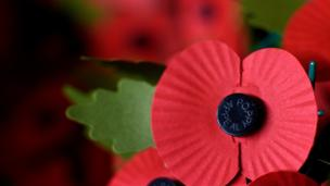 'Poppy' from the web at 'http://ichef-1.bbci.co.uk/news/304/cpsprodpb/16BEC/production/_86546139_gettyimages-493847904.jpg'