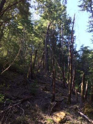 Bosque de California