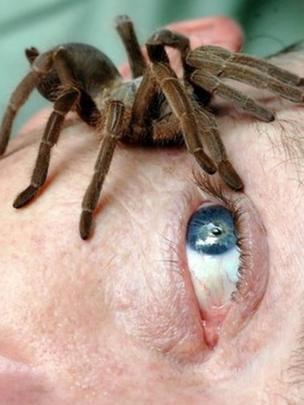 Araña sobre la cara de un hombre