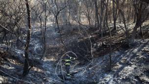 Hayfa'da yangından hasar gören ağaçlar
