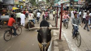 Bull stands in busy street in Varanasi