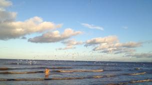Dog running through the waves on Portobello beach