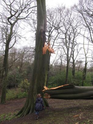 Girl looking at a storm-damaged tree