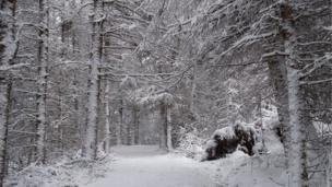 Snow in Glen Doll