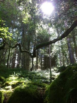 Sunlight streaming through trees