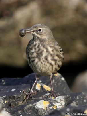 Bird with insect in beak