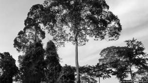 Pictures of the Borneo rainforest taken by the Duchess of Cambridge.
