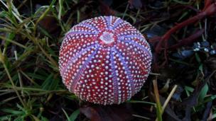 Sea urchin on the beach