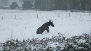 Horse playing in snow in West Sussex