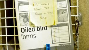 A note attached to an oiled bird form and pegged to the front of it's cage