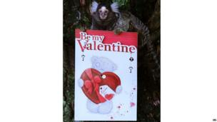 A Marmoset monkey holds a Valentine's Day card