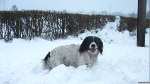 A dog out enjoying lots of snow at Bryneglwys in Denbighshire on Friday morning.