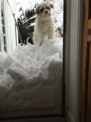 A dog stands on a pile of snow in a doorway. Photo: Heather Wilson