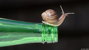Snail on a bottle