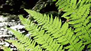 A fern