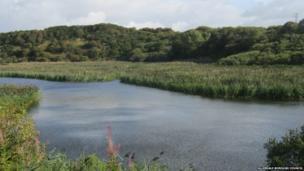 Siddick Ponds Nature Reserve
