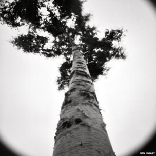 Roadside tree in Tufnell Park London