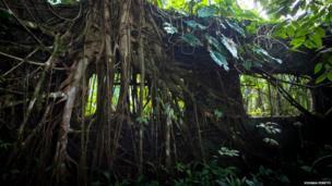Vegetation on Gorgona island