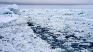 Ice covered sea