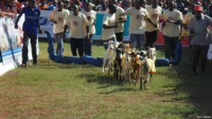 Goat racing