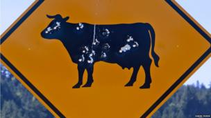 Cow on a sign