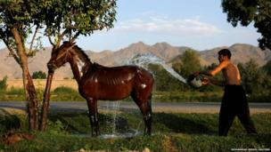 An Afghan man washes his horse in Kabul