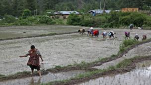 Workers in a rice paddy.