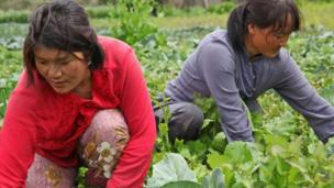 Two women in vegetable patch.
