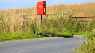 Peacock at post box on Arran