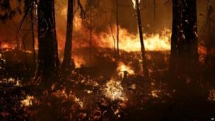 Trees burn as Rim Fire in California continues to burn on 25 August 2013