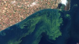 Satellite photo of the coastline with algae visible in the sea
