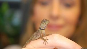 A baby lizard on a hand